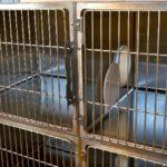 Double-compartment cages decrease feline URI