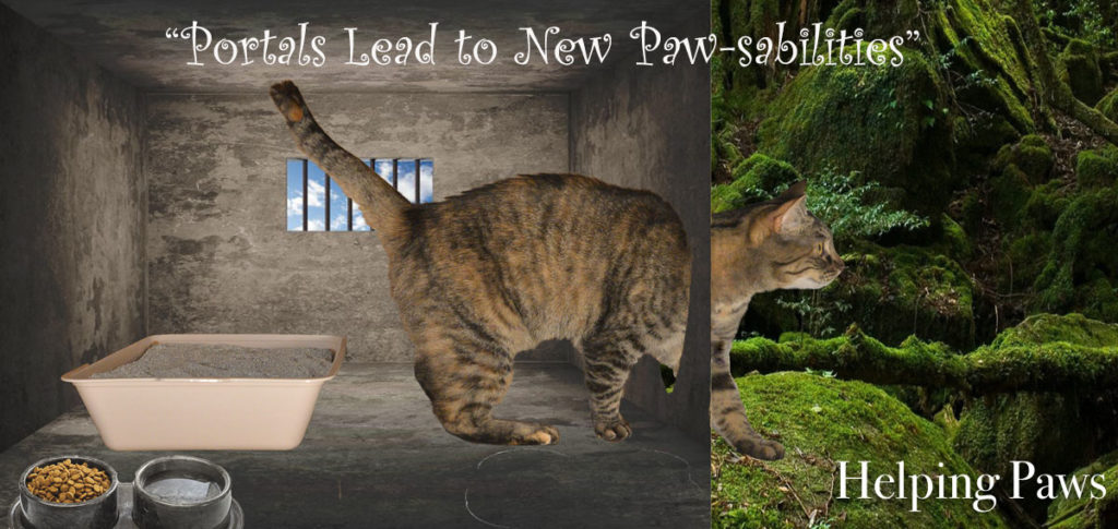 Portals lead to new paws-abilities photomontage