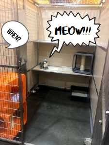What do we want? Better cat housing. When do we want it? Meow!