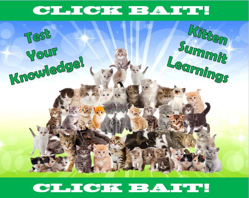 Click Bait: Kitten Summit Learnings
